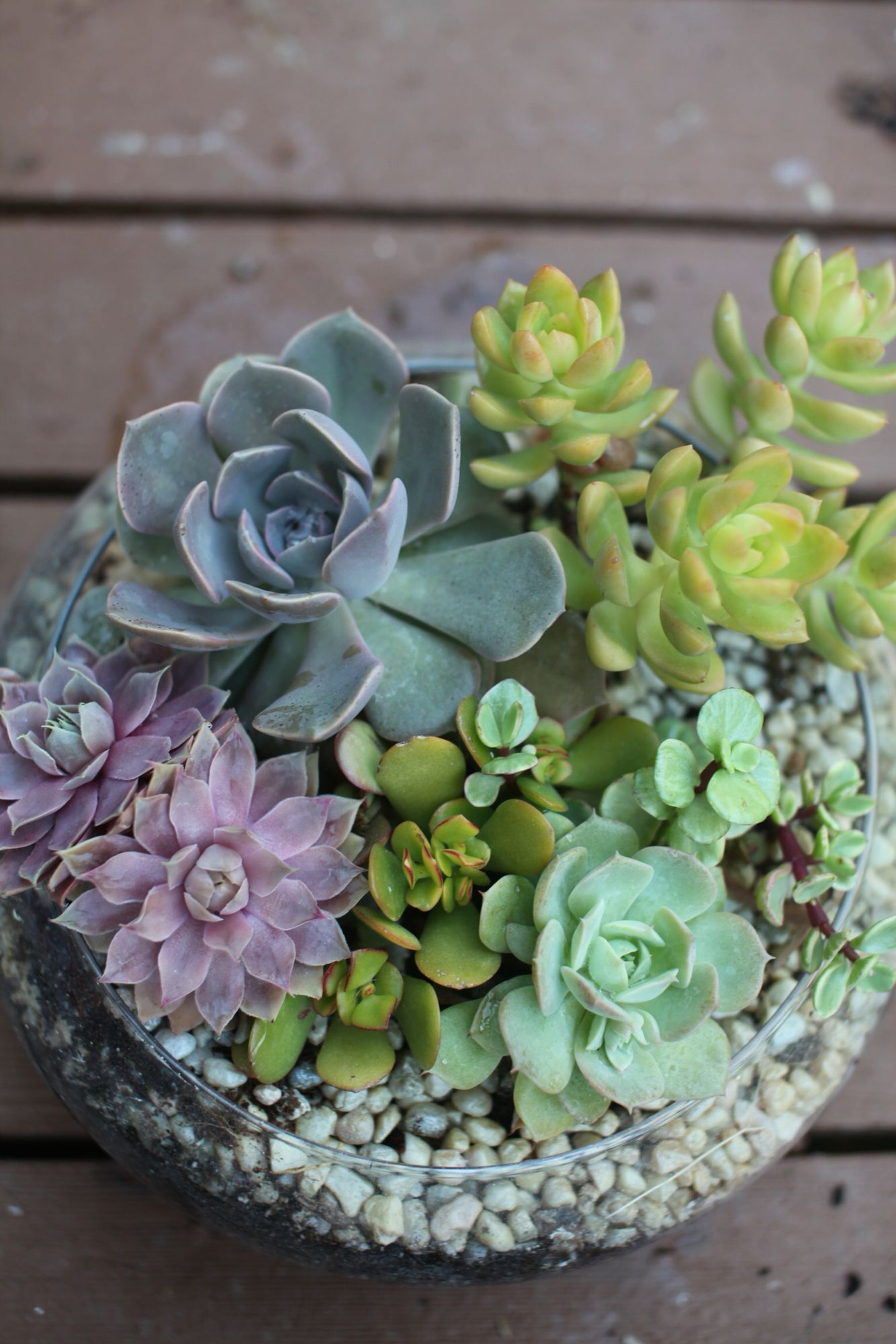 Succulents in a shallow glass bowl succulent pots