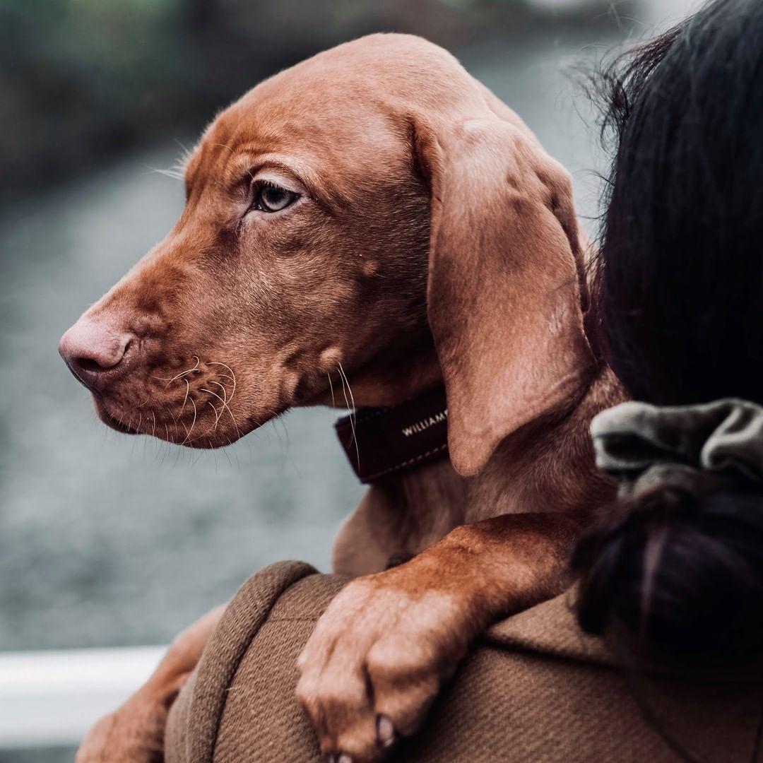 Handgefertigtes Hundehalsband Aus Hochwertigem Wildleder Und