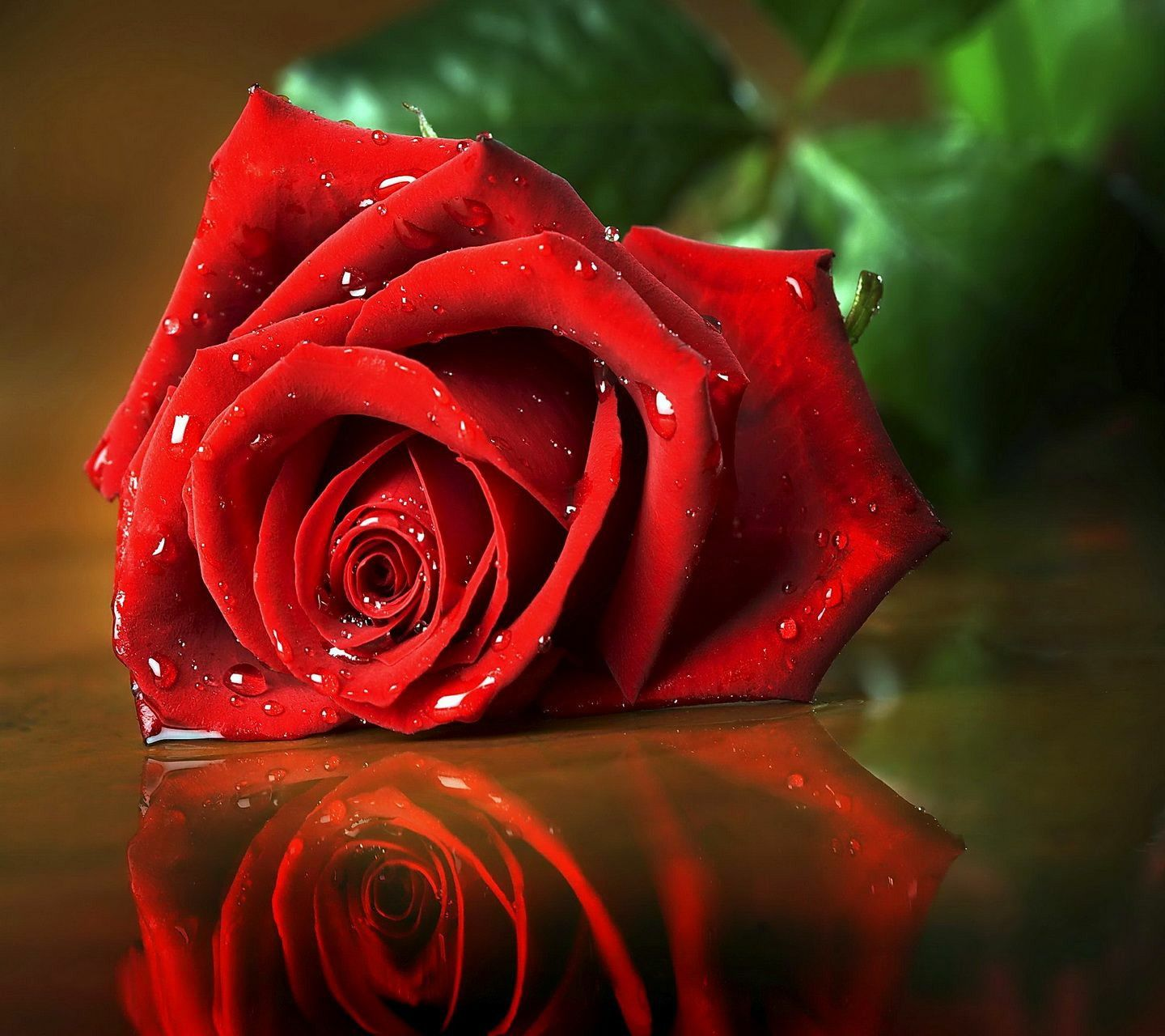 Download Free Red Rose Wallpapers For Your Mobile Phone By Rose Wallpaper Beautiful Red Roses Red Roses