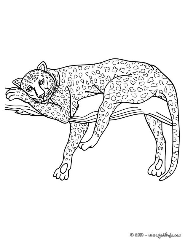 Dibujo para colorear LEOPARDO - Colorear LEOPARDO | ANIMALS ...