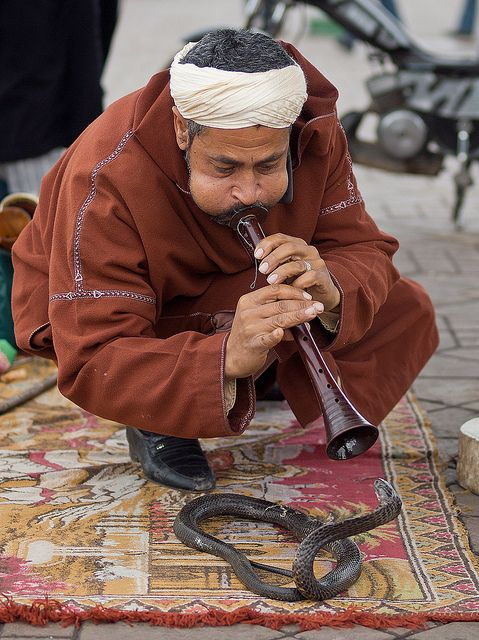 Snake charming is the act of hypnotizing a snake using an instrument called a pungi. Snakes can sense sound, but the snake follows the pungi, and considers the instrument and the snake charmer as a threat and treats them like a predator.