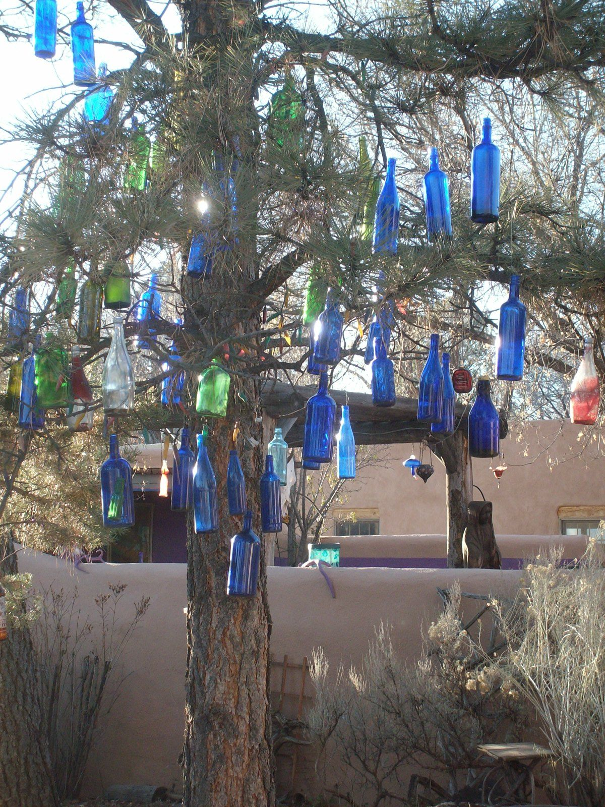 blue bottle tree - new mexico - There's a smaller version ...