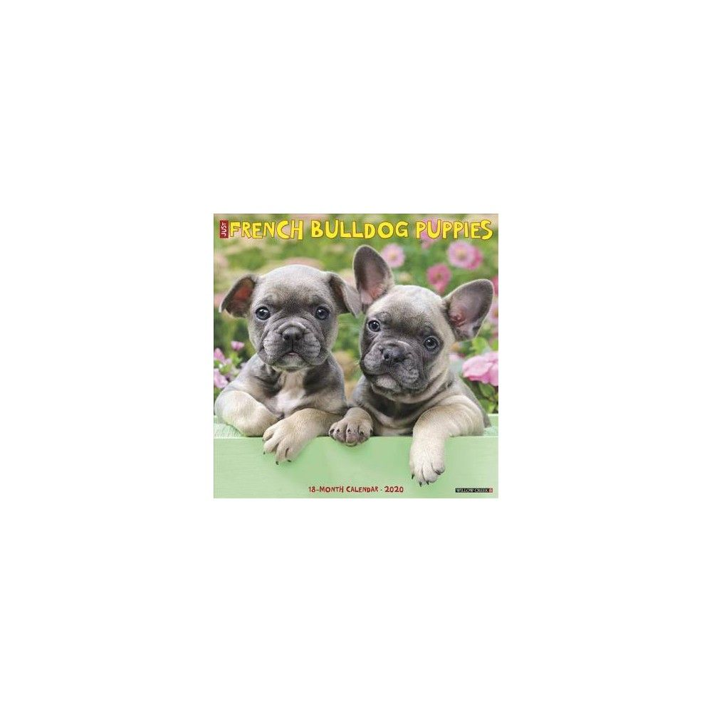 French Bulldog Puppies 2020 Calendar Paperback Bulldog