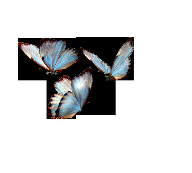 Http Www Pngimagesfree Com Butterfly Beautiful Butterfly Light Colour Png Beautiful Butterflies Art Butterfly Wallpaper
