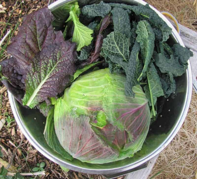 How To Plant Your Fall And Winter Garden