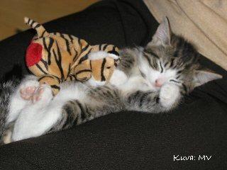 Helmenvalkoinen maailma: Pienen pieni Tazza nukahti syliin <3