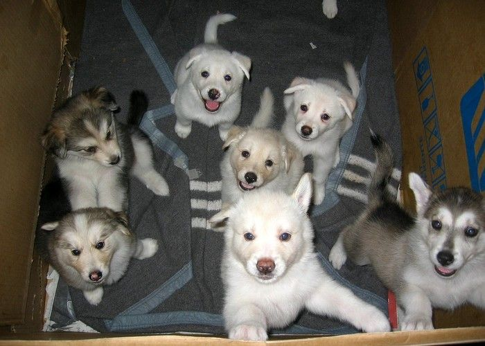 Best Puppies Army Adorable Dog - 3d472e7c4a0ee099a74b436ed8ed4895  Image_489979  .jpg