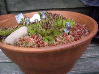 Poppy Patchwork: Garden