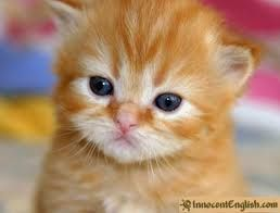 really cute animals - Google Search
