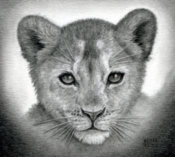 LION LIONESS LION CUB art drawing prints 2 sizes A4//A3 /& note greetings card