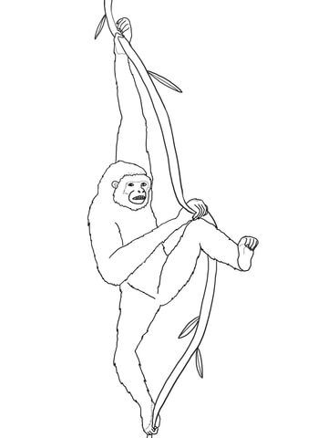 Hanging Gibbon Coloring Page Coloring Pages Free Printable