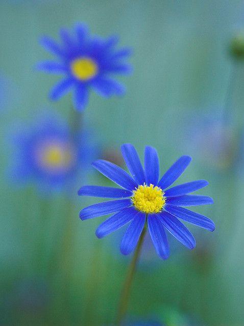 ~~Blue by sonohigurasi_photo~~
