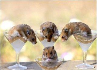 Hamster family 4