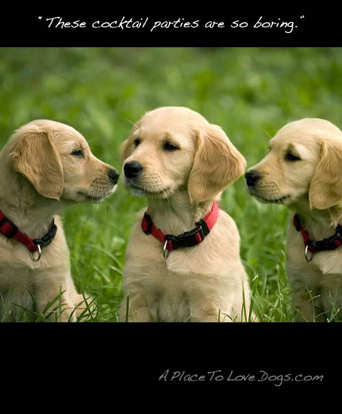 So Boring A Place To Love Dogs Most Beautiful Dog Breeds Dogs Golden Retriever Golden Retriever