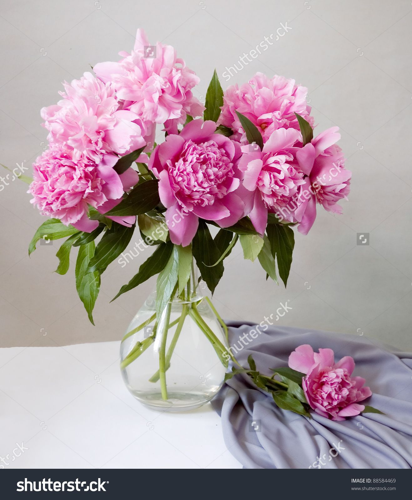 Pin by darya bilous on lovely photos pinterest flowers in vase stock images royalty free images vectors reviewsmspy