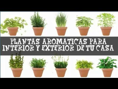 6 Plantas Aromáticas Para Cocinar Cómo Usarlas Cultivarlas Y Conservarlas Plantas Aromaticas De Interior Plantas Y Cultivo De Plantas