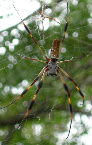 Spiders At Spiderzrule The Best Site In The World About Spiders