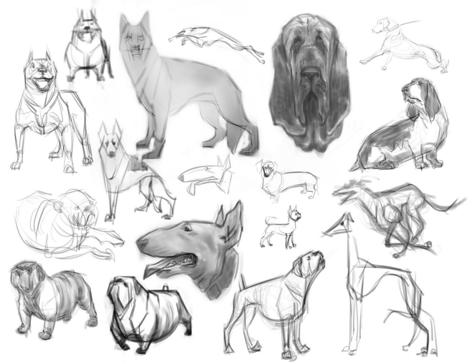 flustercup: Dog Sketches - Animal Anatomy Class   Draw & Concept ...
