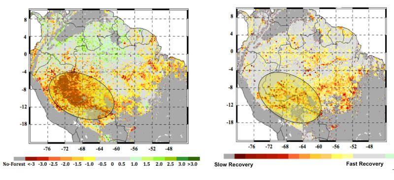 Severe Climate Jeopardizing Amazon Forest Study Finds Amazon