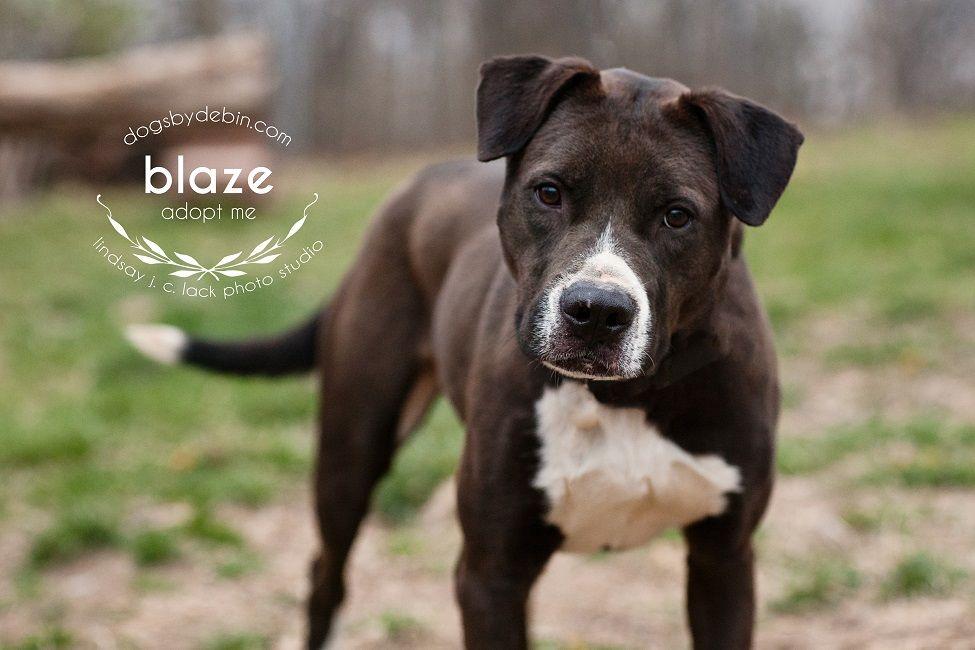 Pitbull puppies for adoption kansas city