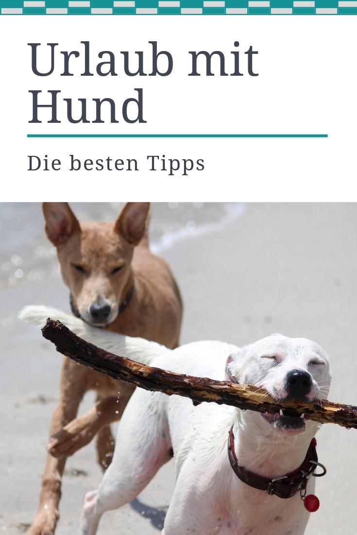 Wohin In Den Urlaub Mit Hund Wir Verraten Dir Die Beliebtesten