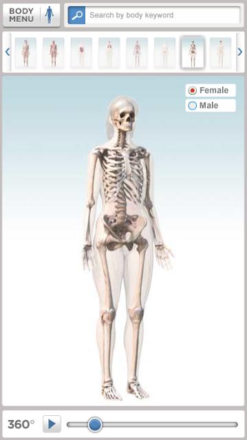 model af kroppens anatomi