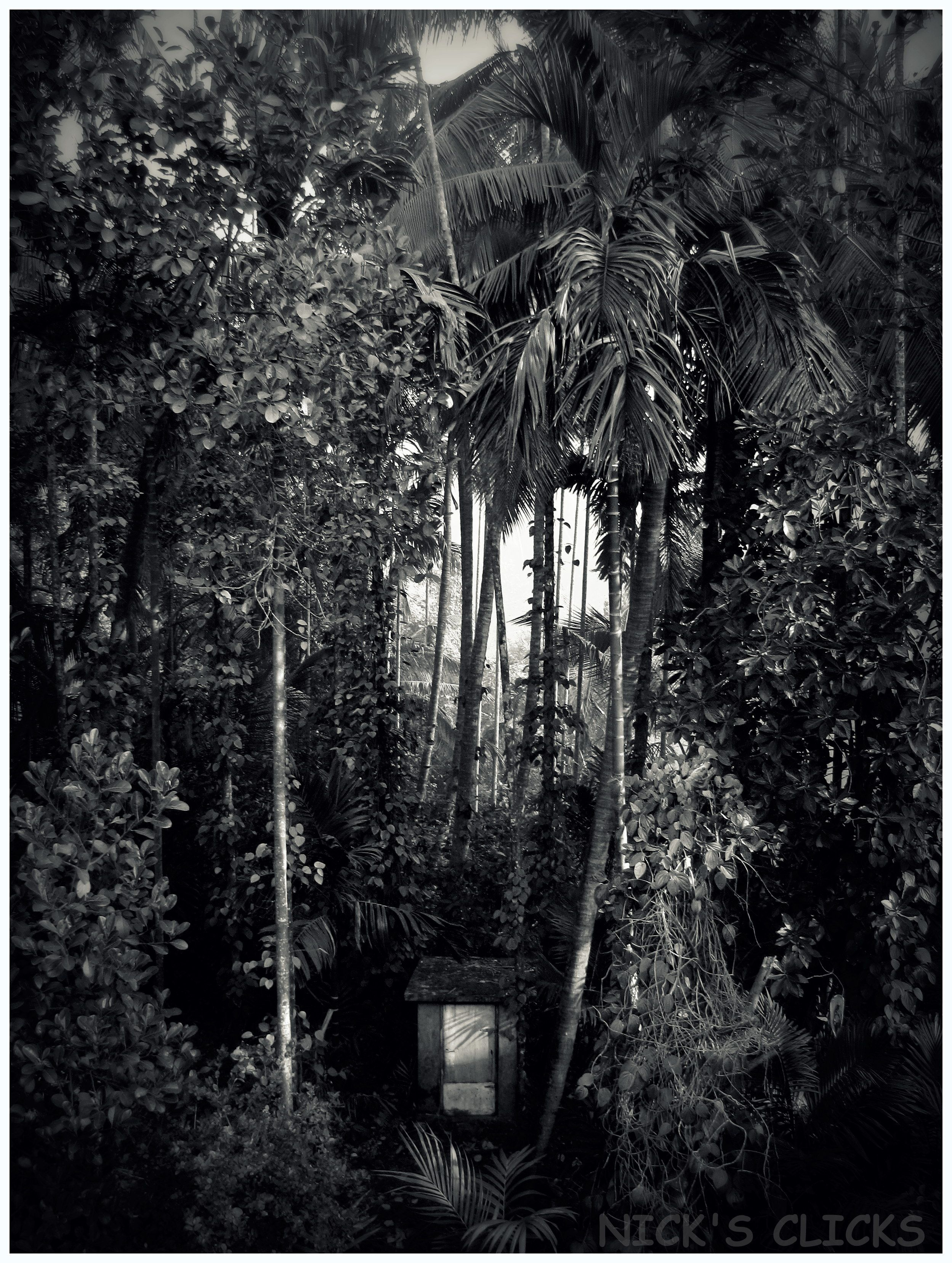 Lonely home konkan india jungle find this pin and more on black and white photography