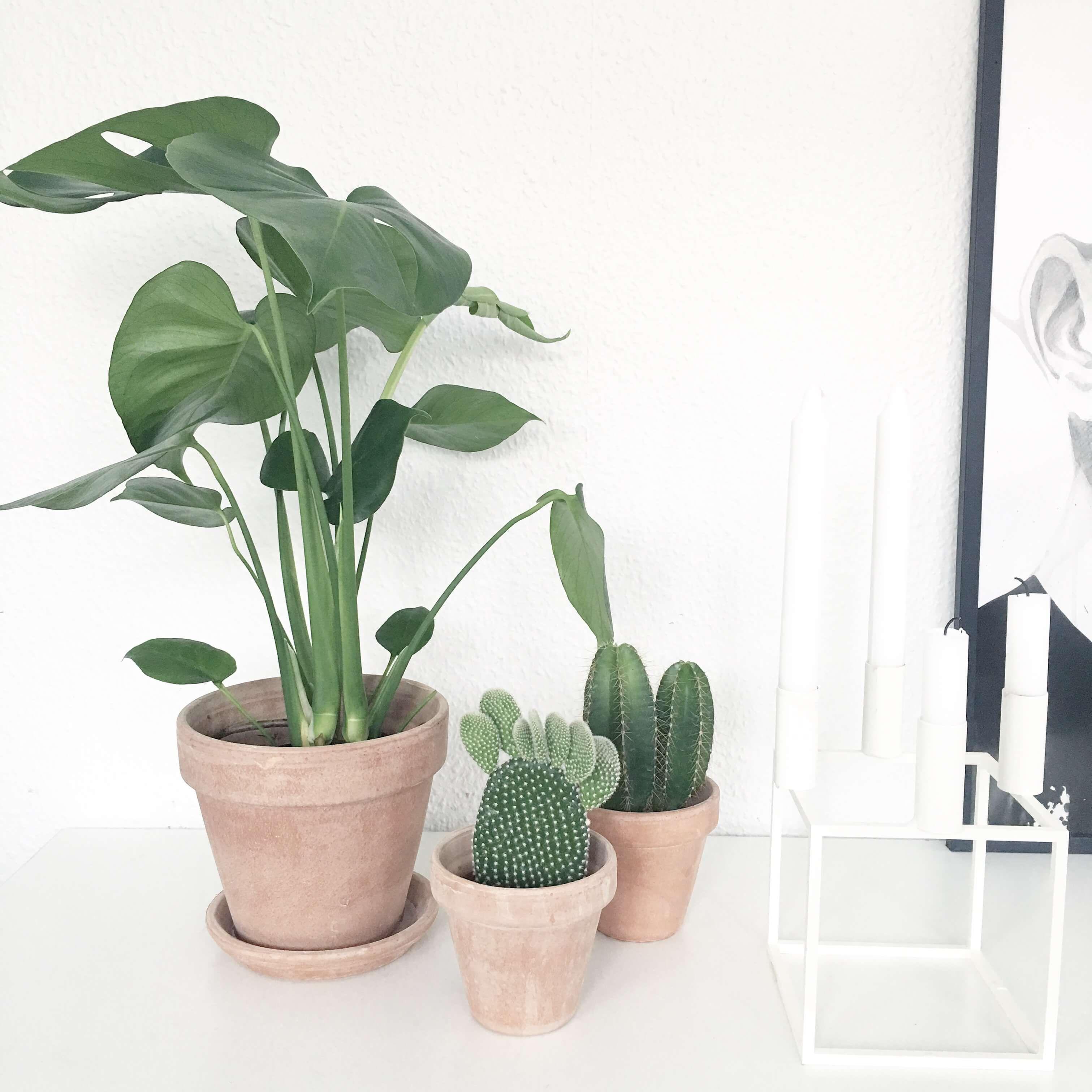 Billedresultat for badev relse planter plants for Planter til koidam