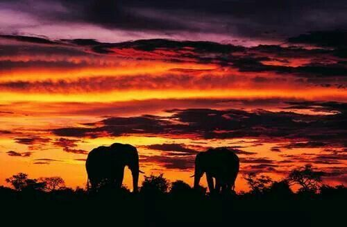 Africa Sunset W Elephants