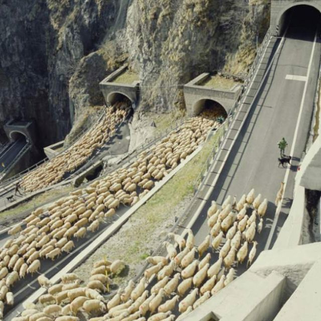 ...and then there were sheep. Repinned from reddit.com