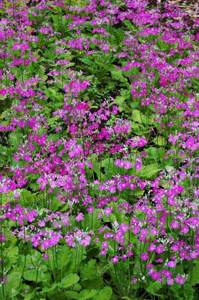 Purple flowers - Stock Photo , #Aff, #flowers, #Purple, #Photo, #Stock #AD