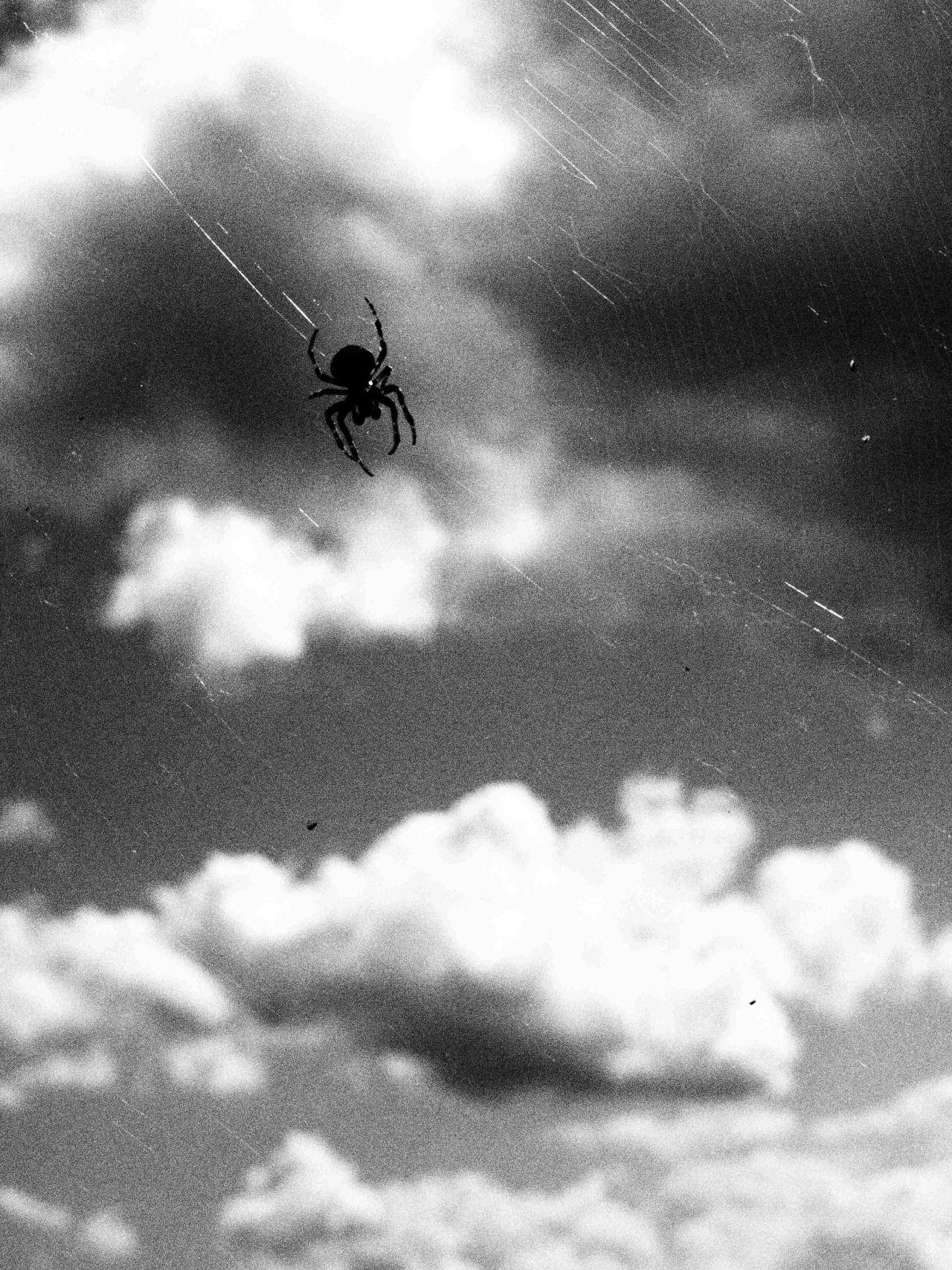 "jiji-de-jiji: "" 雲と蜘蛛 Clouds and Spider © jiji "" jiji-de-jiji Kumo to kumo 雲と蜘蛛 (Clouds and spider) - Japan - 2016 © jiji"