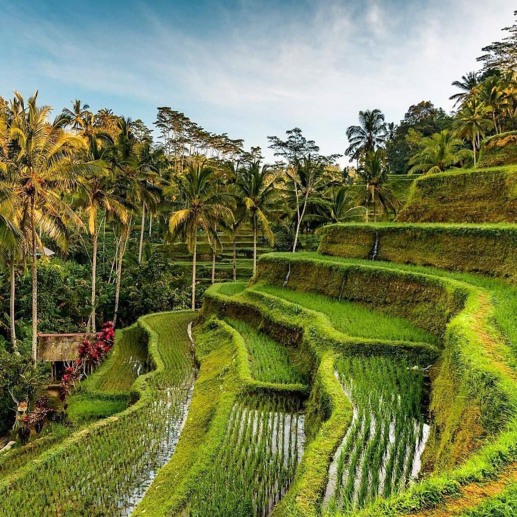 Wisata Alam Bali Tegalalang Ubud Bali Tempat Indonesia