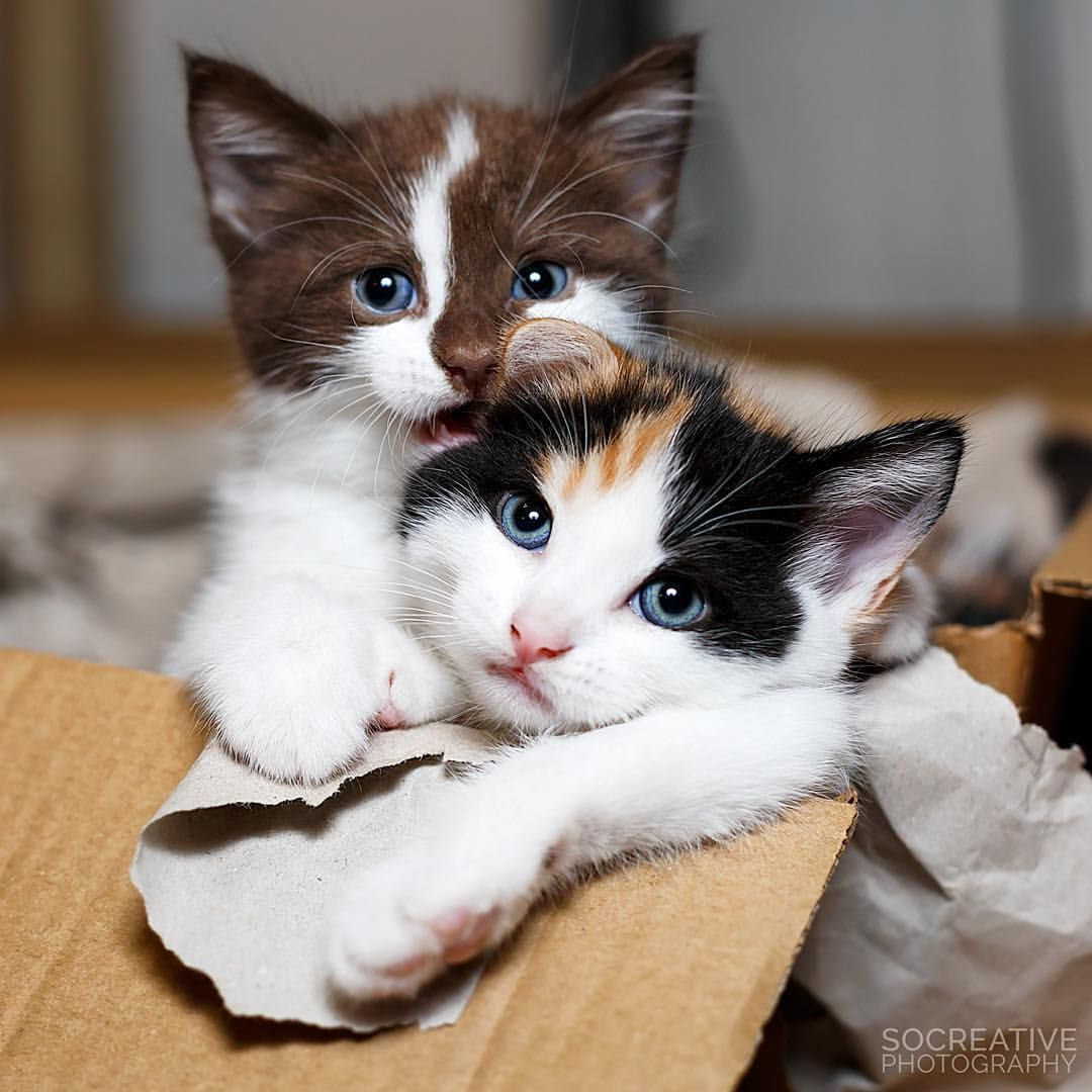 Beautiful Kittens Sophie And Megan Cuteness Overload See This And More Photos Of Cats On Instagram Socreativephoto Cute Cats And Dogs Cute Animals Cats