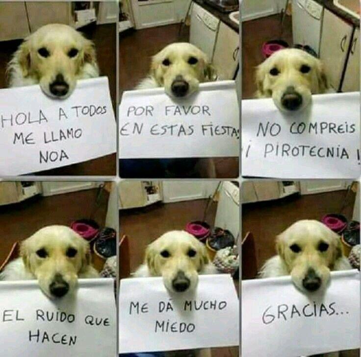 Aaaaaaa Que Hermosura Aaa Tan Hermosa Perros Perros Frases Perros Tristes