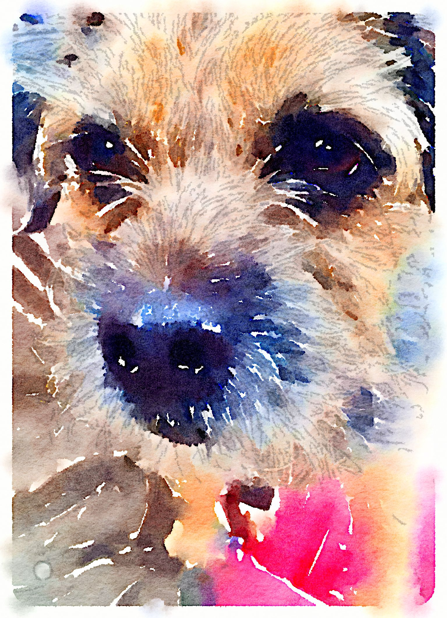Jackmolly3 Border Terrier Puppy Border Terrier Dog Art