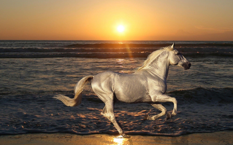 Simple Wallpaper Horse Beach - 3d51b1ba9898b106c8e1b2c9919775ae  Image_64145.jpg