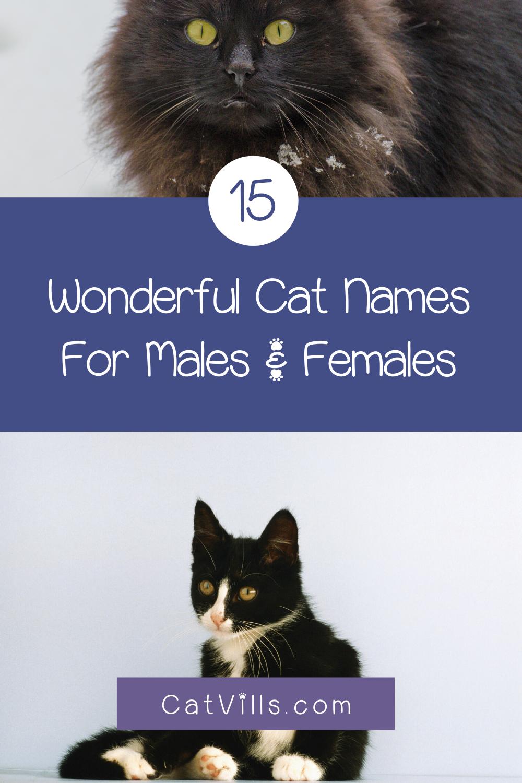 15 Unique Adorable Unisex Cat Names Catvills In 2020 Cat Names Funny Cat Memes Funny Cats