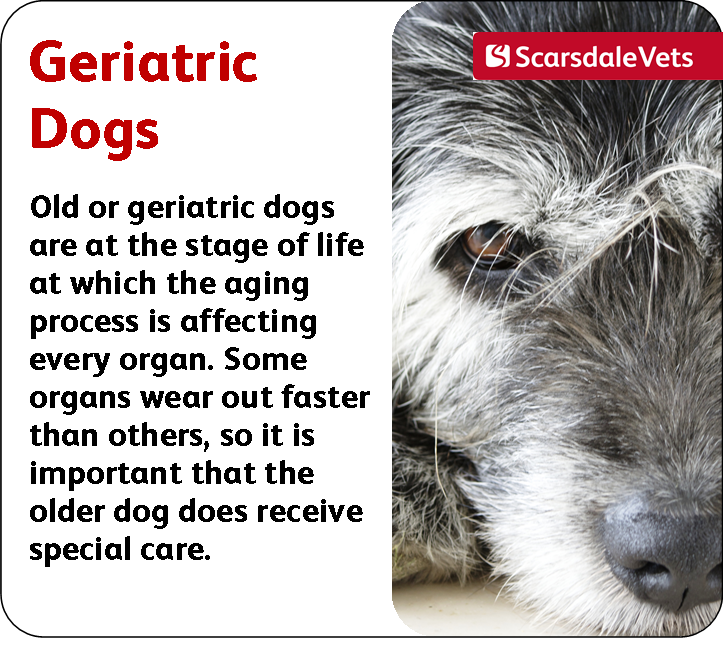 Geriatric Or Old Dogs Dog Stuff Old Dogs Dogs Pets