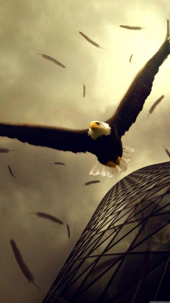 Pin By Tech Egis On Samsung Galaxy S5 Bald Eagle Eagle Bird Cool eagle wallpaper 3d
