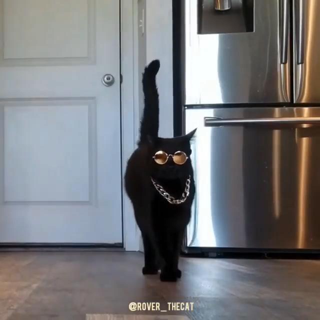 Photo of Luxury cat