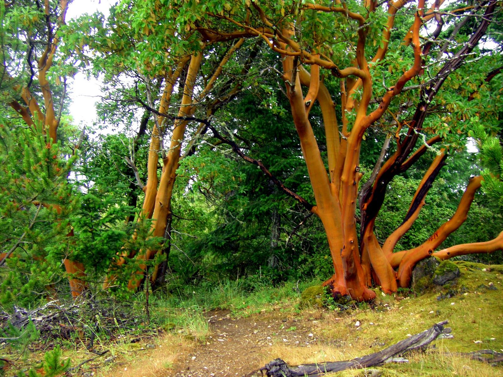 name on the <b>tree</b> anyways the color of these <b>arbutus</b> <b ...