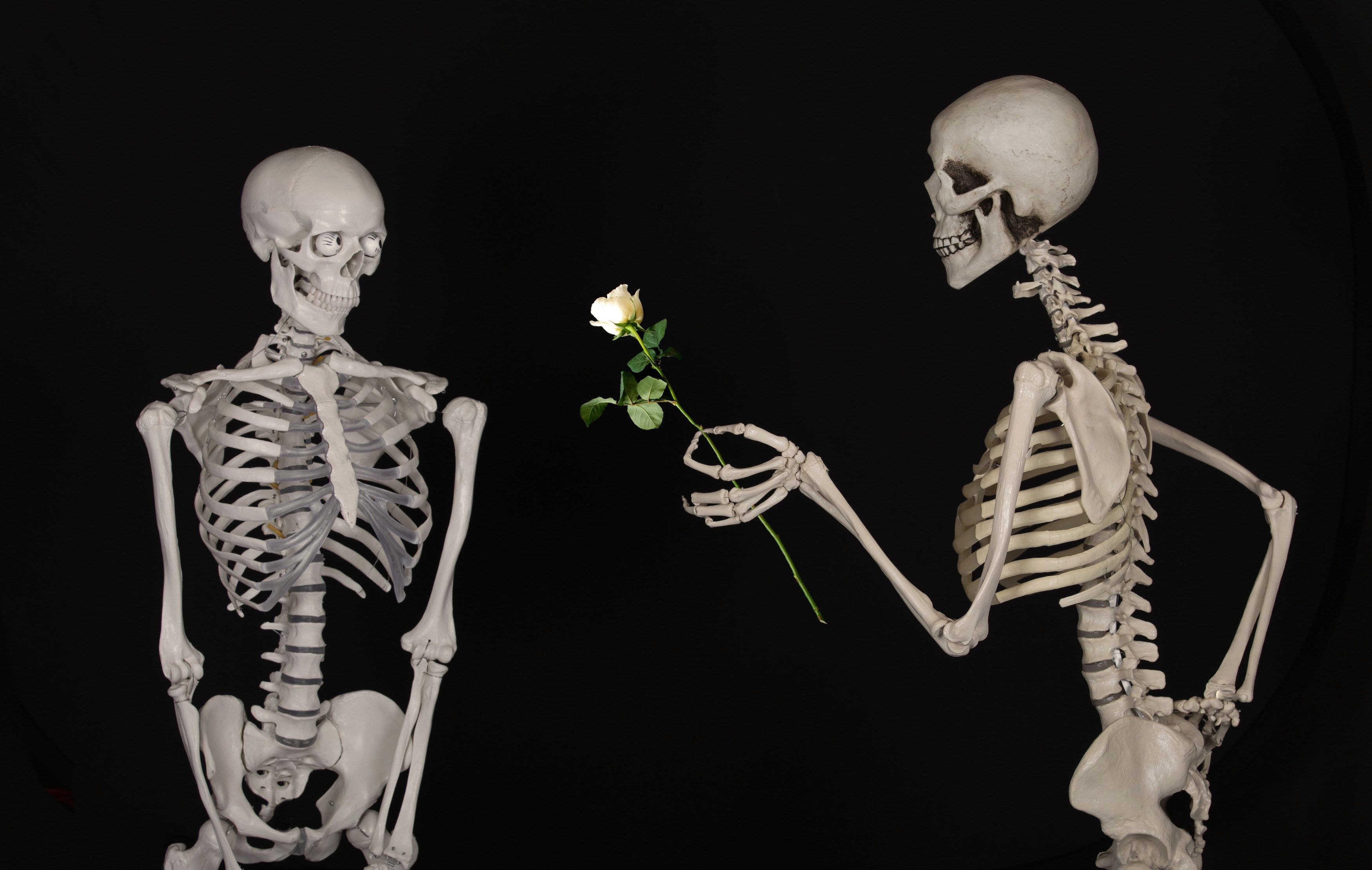 The late Propose Death aesthetic, Cute skeleton, Grunge
