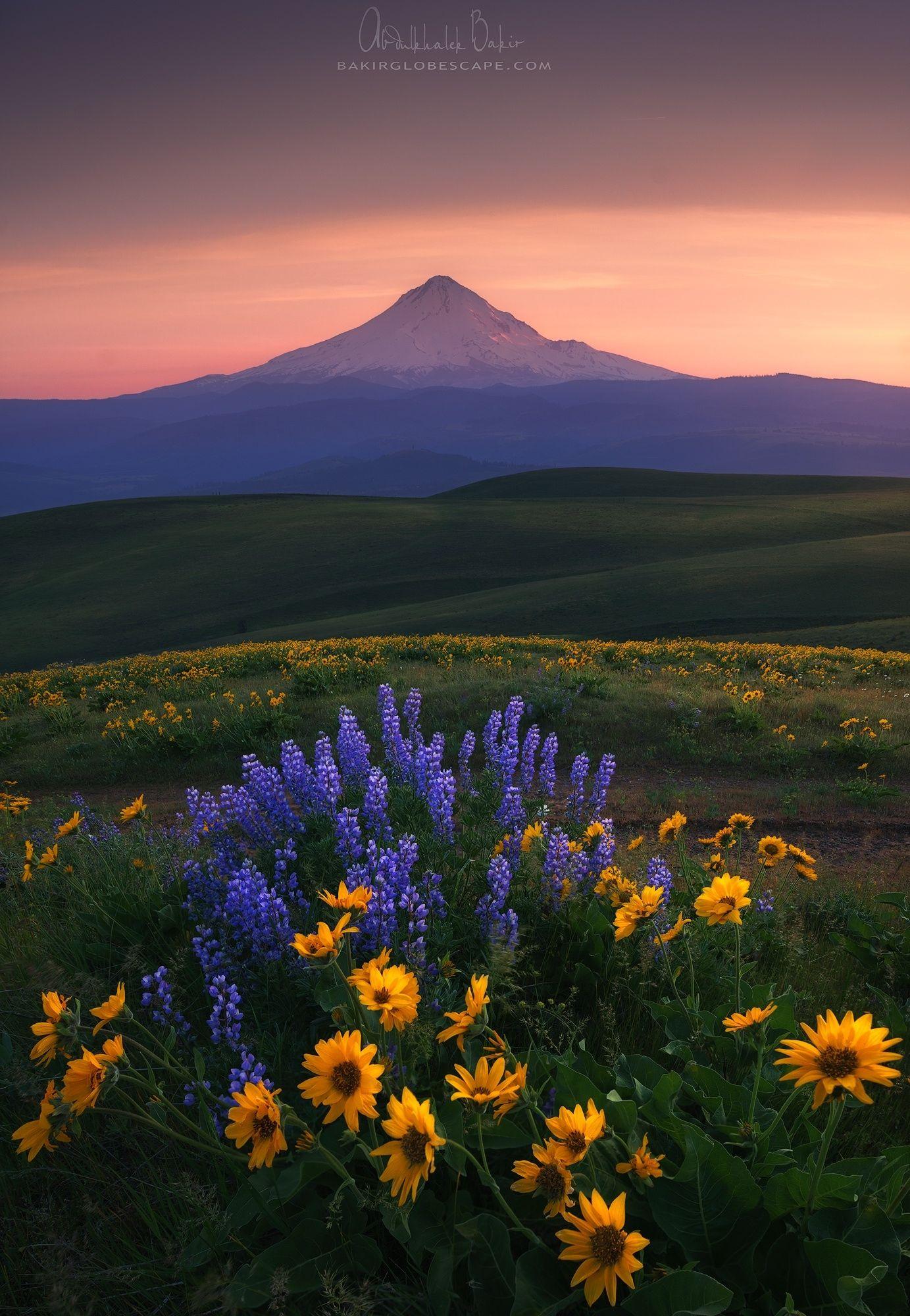 OREGON Colombia hills - bloom landscape #washington flowers mountain #wildflowers