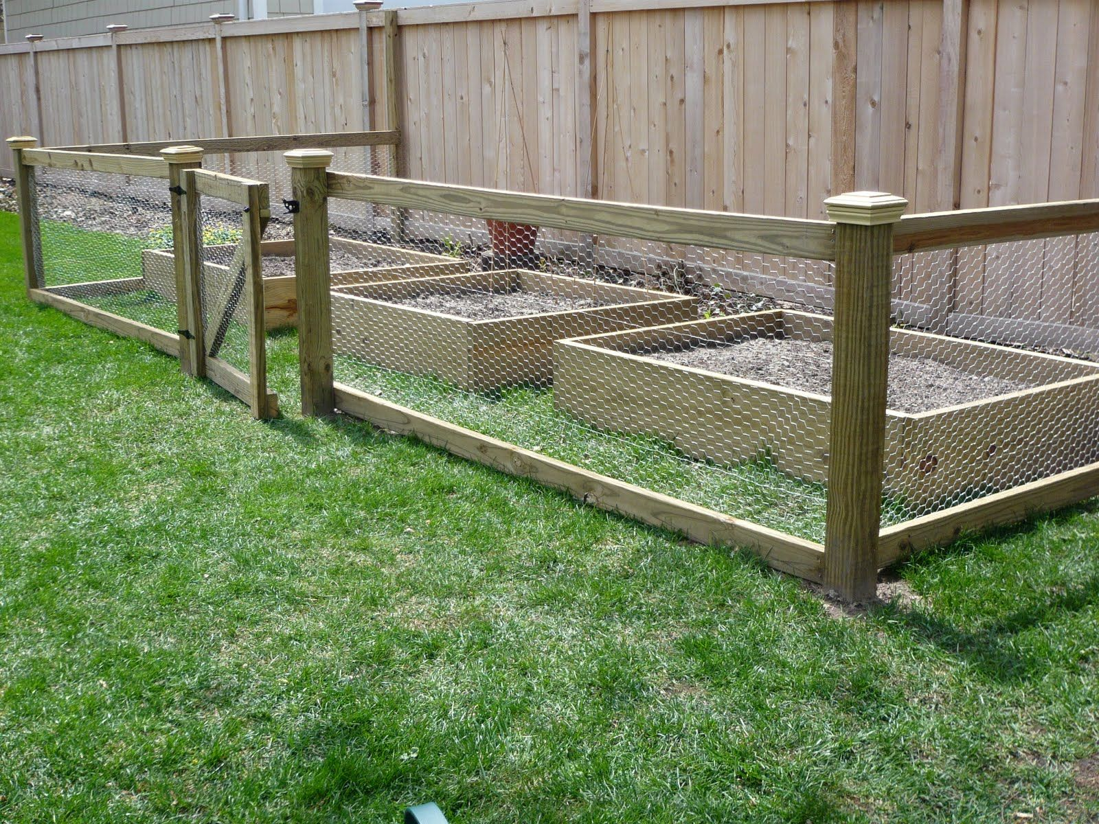 nice looking chcken wire fence | Of course, we had to add some ...