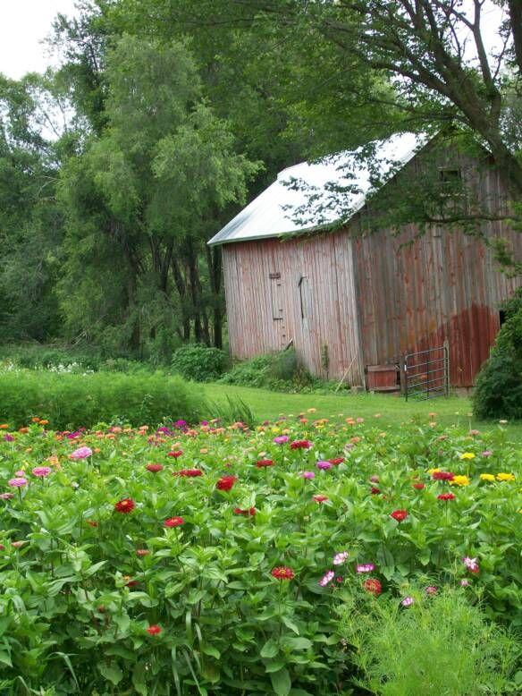 St. Bridget's Flower Farm in Solon, IA pick fresh