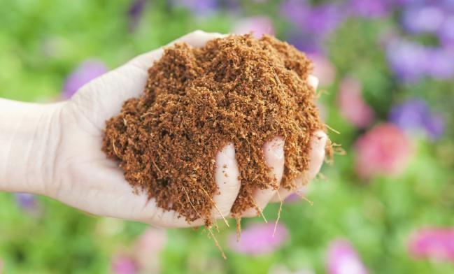 7 cosas que puedes hacer con aserrín en la casa y en el jardín - IMujer
