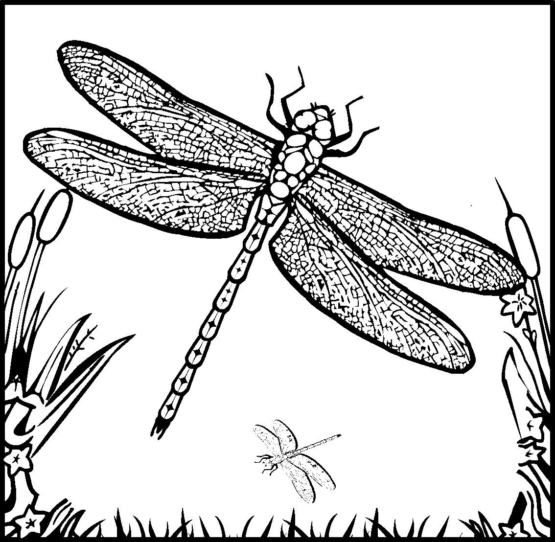 detailed coloring pages for adults dragonfly and fairy coloring