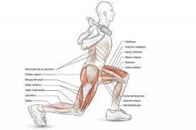 Elevaciones de piernas dibujo musculos trabajados