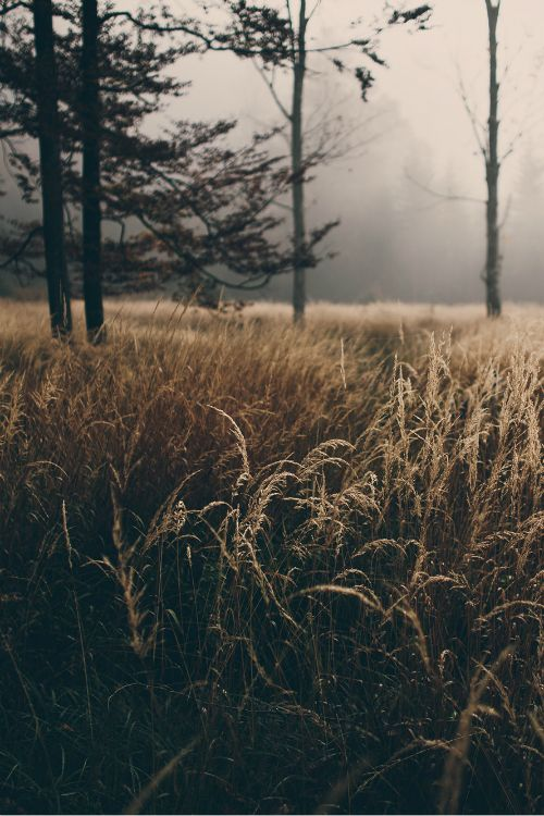 mystic-revelations:  follow me to a place we can be, by Wolfgang Schrittwieser
